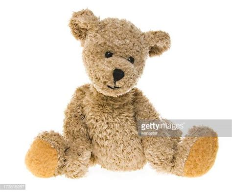 Top Teddy Picture by 60 Top Teddy Pictures Photos Images Getty Images