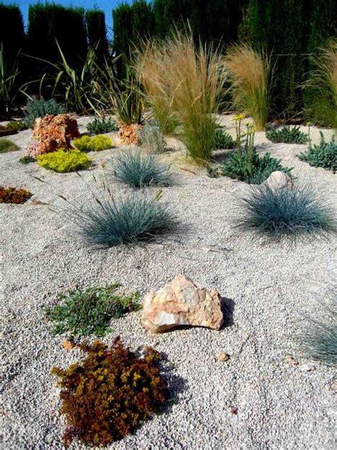 pflanzen für kiesbeet pflanzen f 252 r steingarten kiesbeet bodendecker ziergraser