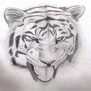 Pencil sketch - Tiger by Finchwing on DeviantArt