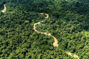 The, Importance, Of, Keeping, Forests, Intact