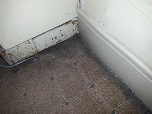Black Mold In Carpet Pictures - Carpet Vidalondon