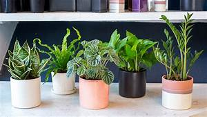 Indoor, Houseplants, You, Can, U0026, 39, T, Kill, Unless, You, Try, Really, Really, Hard