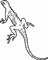 Lizard Coloring Pages Gecko Lizards Printable Leopard Realistic Colouring Frogs Bad Sheets Lineart Snakes Print Reptile Geckos Getcolorings Getcoloringpages Adult sketch template