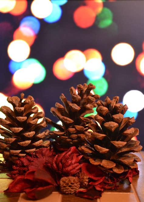 images flower petal red color dessert lighting
