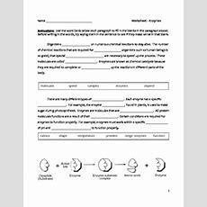 Cloze Worksheet  Enzymes  Biology (9  12) By Educator Super Store