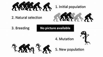 Algorithm Genetic Substitution Cipher Breaking Using