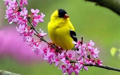 Wallpapers Birds Desktop Bird Yellow Seo Tags