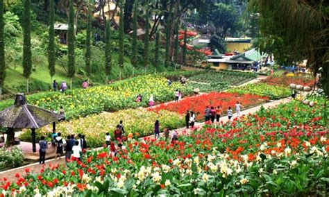 selecta taman bunga kolam renang batu villa