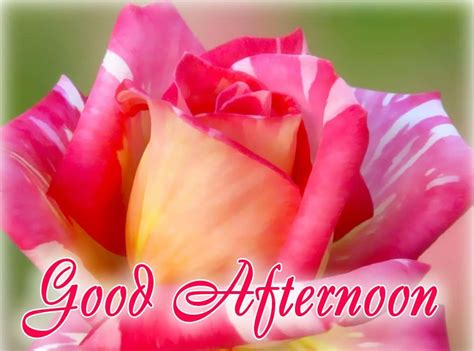 Afternoon Images Afternoon Hd Wallpaper Images Pictures Photos 2018