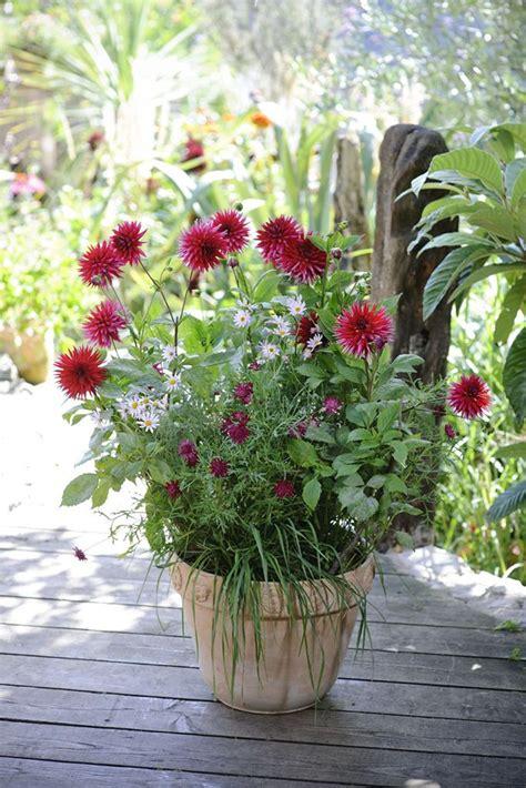 plant dahlias in pots 28 images houston lifestyles