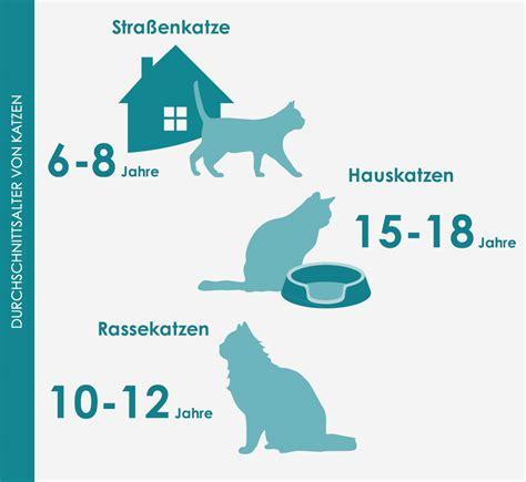 plattenepithelkarzinom katze lebenserwartung tierische
