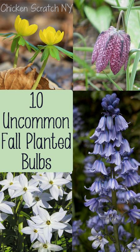 Tips Planting Fall Bulbs by 10 Uncommon Bulbs To Plant In The Fall Great Gardens