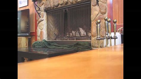 How To Capture A Bird Stuck In Your Fireplace.