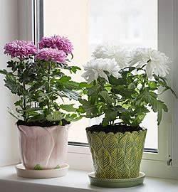 Herbstblumen Für Kübel : welche blumen kann man im herbst pflanzen ostseesuche com ~ Buech-reservation.com Haus und Dekorationen