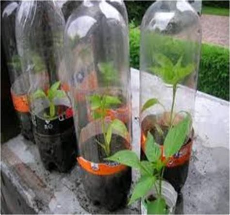 build  mini greenhouse  science fair project