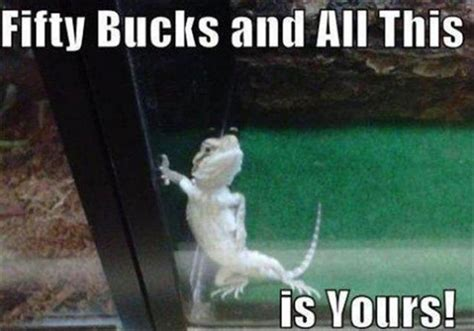 Lot Lizard Meme - memes to make you smile part 2 42 pics izismile com
