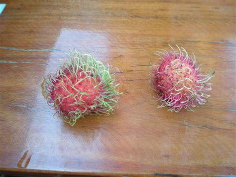Bizarre Fruit Photo