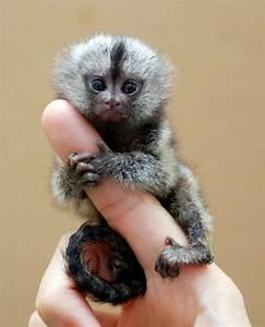 Finger Monkeys ~ Damn Cool Pictures