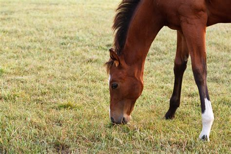 weaning foals weanling options mares