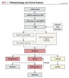 G6PD Deficiency Pathophysiology