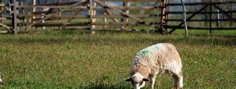 sheep manure   garden palmers garden centre