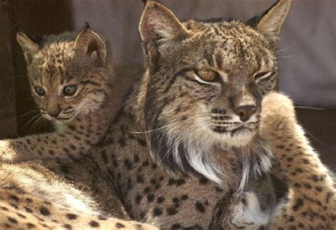 rare animals   edge  extinction sector definition