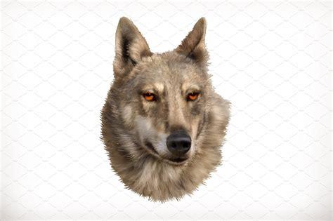wolf head icons creative market