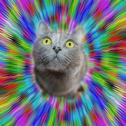 Cat Trippy Gifs Lsd Hallucination Acid Trip