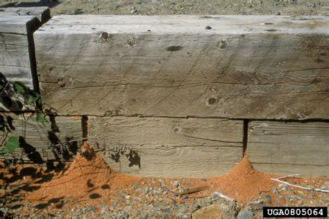 Basement Flies by The Pest Specialist Carpenter Ants