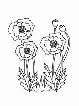 Poppy Coloring Pages Flower Poppies Printable Carnation Flowers Veterans Sheets Veteran Blank Coloringpages101 Recommended Getcolorings Mycoloring Holidays Template Popular sketch template
