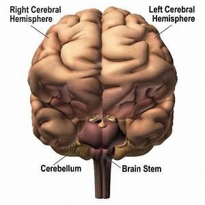 Fun Human Brain Facts for Kids