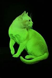neon cats on Pinterest