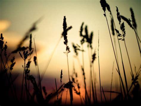 Grass Silhouette Wallpaper Hd Wallpapers