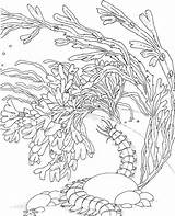 Coloring Pages Coral Reef Ocean Drawing Sea Adults Barrier Sponge Snake Printable Adult Colouring Reefs Seascape Template Under Colorpagesformom Sketch sketch template
