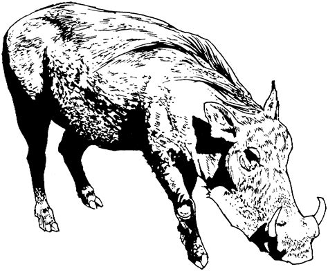 warthog coloring pages