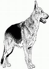 Coloring Shepherd German Dog Popular Template sketch template