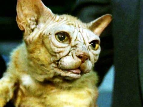 yoda cats  felines   dark side