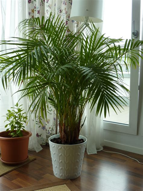 artificial plants for home decorating with nature rememberwren 4188