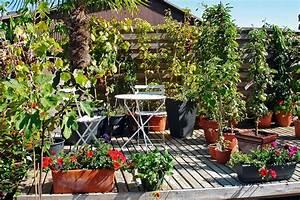 Apfelbaum Für Balkon : obst und beeren wohnen ~ Michelbontemps.com Haus und Dekorationen