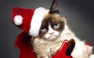 grumpy cat worst grumpy cat s worst 2014 movieboozer