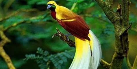 flora  fauna identitas  provinsi  indonesia gatra