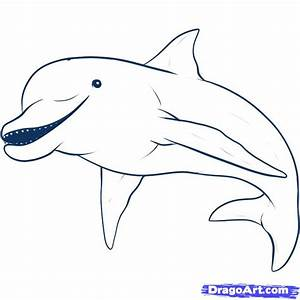 How to Draw a Dolphin, Step by Step, Sea animals, Animals ...