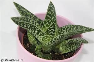 Aloe Vera Ikea : shoplog ikea en goes ~ Preciouscoupons.com Idées de Décoration