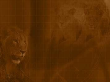 lion  powerpoint templates