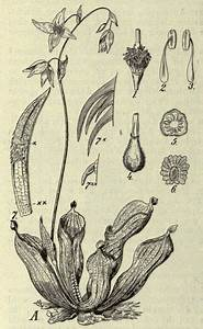 Old Textbook Diagram Of A Plant