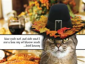 Vintage Thanksgiving Funny Cats