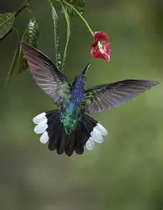 Beautiful Hummingbird Photography