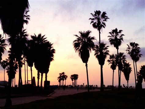 palm tree l l a s palm trees could be in trouble destination tips