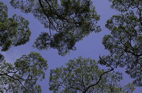 canap tress canopy biology