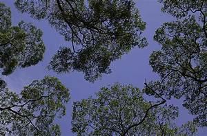 Canopy  Biology